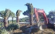 PLANTATION DE VEGETAUX